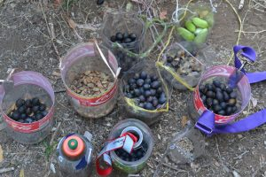 Cosecha de semillas con niños del Liceo Jorge Alessandri de San Fabián